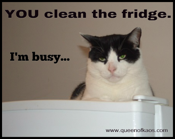 You Clean The Fridge - I'm Busy
